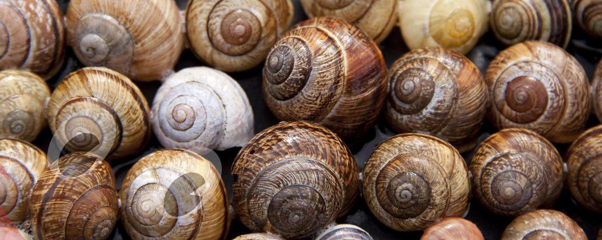 propiedades y beneficios de comer caracoles
